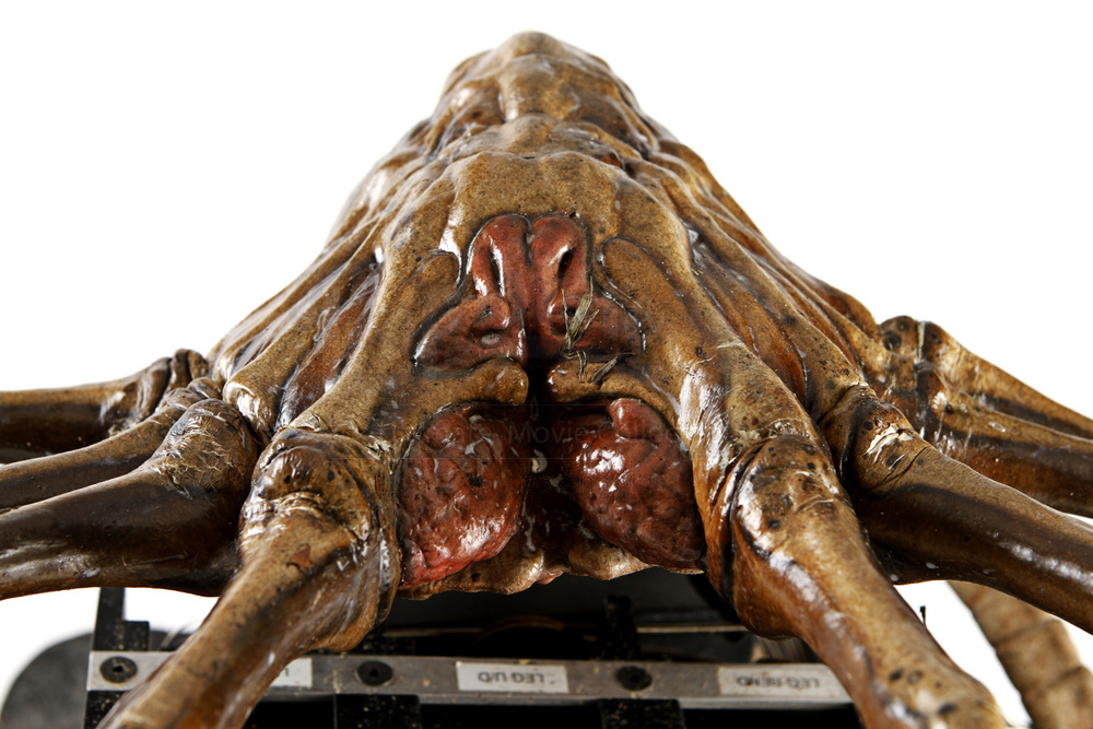 alien vs predator facehugger - photo #24