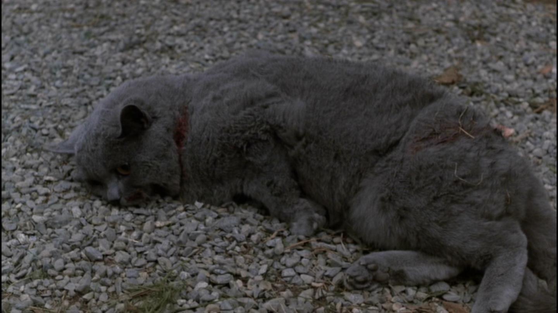Cat In Pet Cemetery Movie
