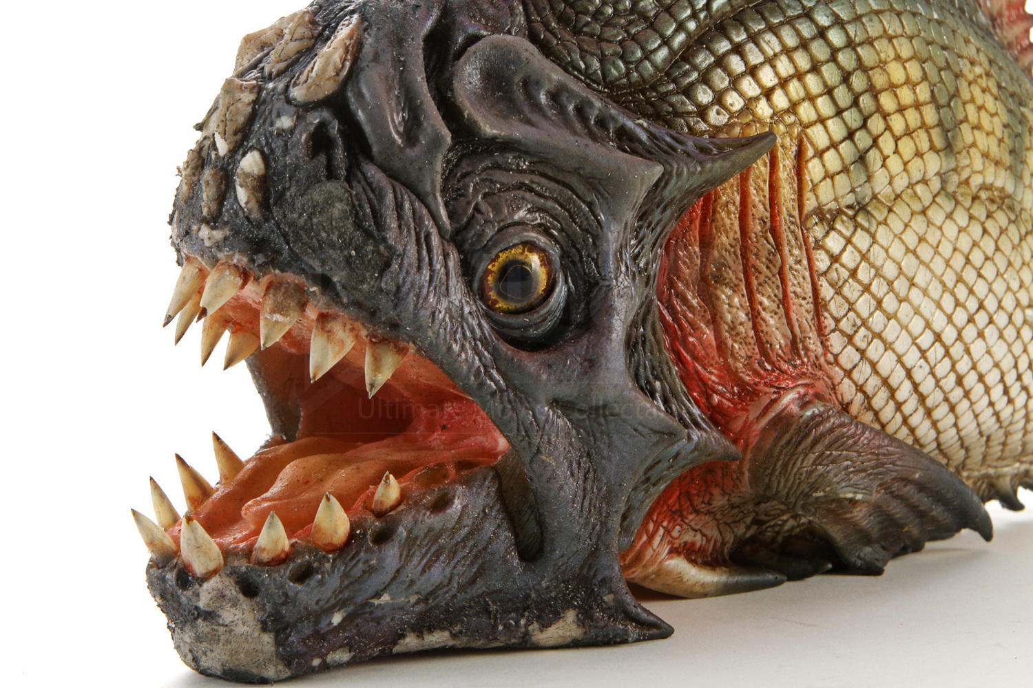 Glove style biting piranha with sharp teeth prop store for Pictures of piranha fish